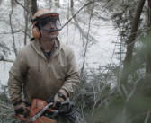 Bob and the Trees: Compelling Feature Shot on Blackmagic Pocket Cinema Cameras